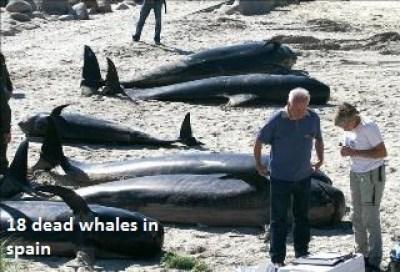 Dead Whales in Spain