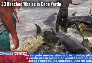 Dead Whales in Cape Verde
