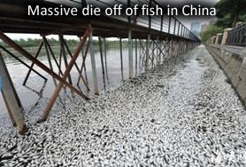 Fish dead in china