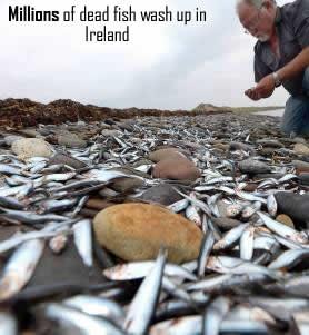 Fish dead in Ireland