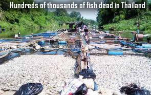 Fish dead in Thailand