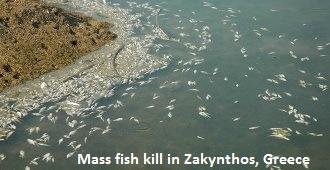 Fish Kill in Greece