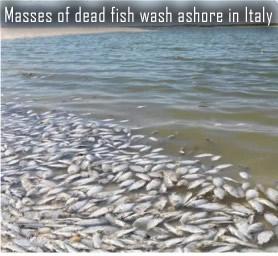 Fish kill in Italy
