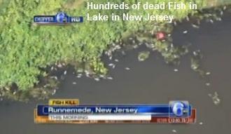 Fish Kill in Runnemede