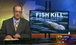 Fish Kill USA