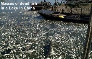 Massive Fish kill China