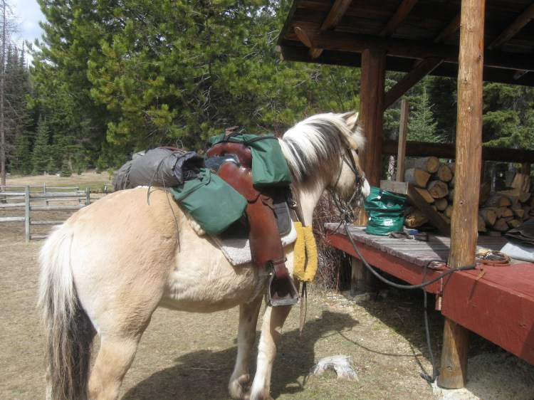 Little Liska Pearl packed and ready to start her Long Riding career. The Black Mountain Saddle from Tuckers and new front and rear bags fro OutFitters Supply, Looking good Liska