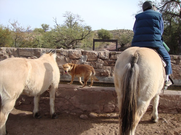 Everyone needs a drink at the end of a ride on the Arizona Trail.