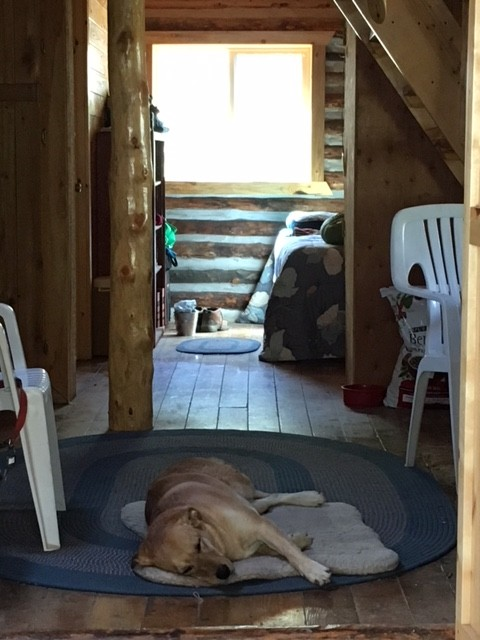 Bella, Rosie's dog, resting inside her cool cabin.