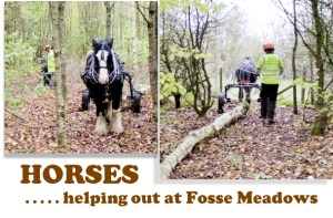 Horses help out at Fosse Meadows