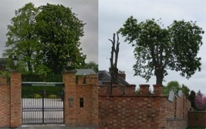 Photos of trees (before/after)
