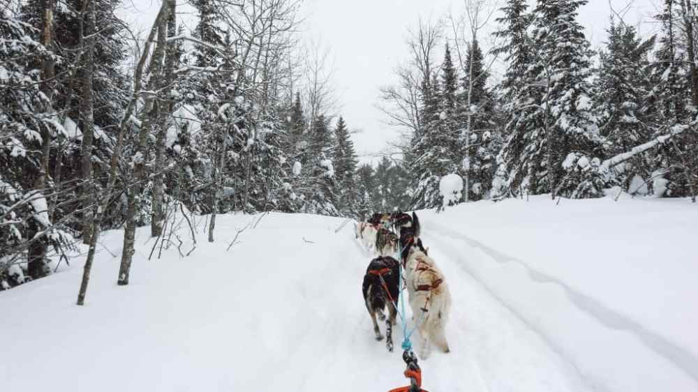 Complete this bucket-list experience and try Michigan dog sledding with Nature's Kennel. Be prepared for your trip with this review and packing list. #dogsledding #michigandogsledding #natureskennel #puremichigan #michigan