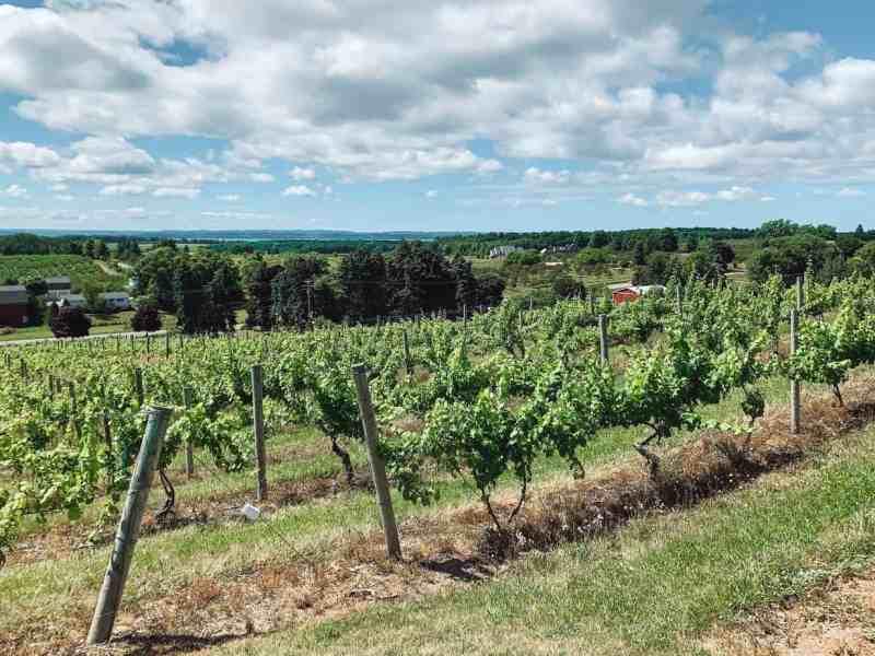 Chateau Chantal - an Old Mission Peninsula winery