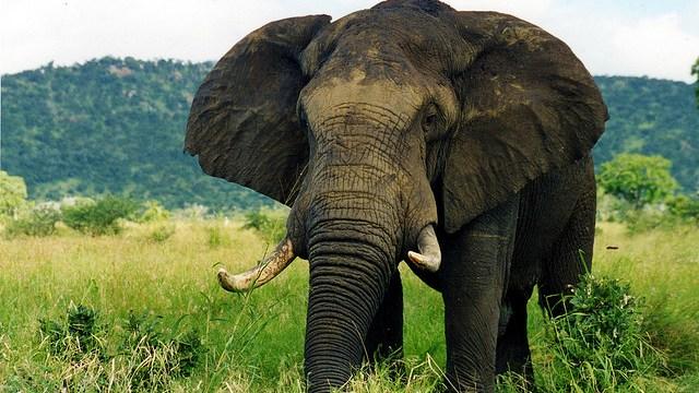 "Eo3 6-Week ""Be The Elephant"" Challenge"