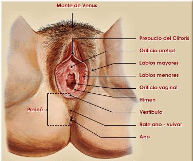 Anatomía de la mujer