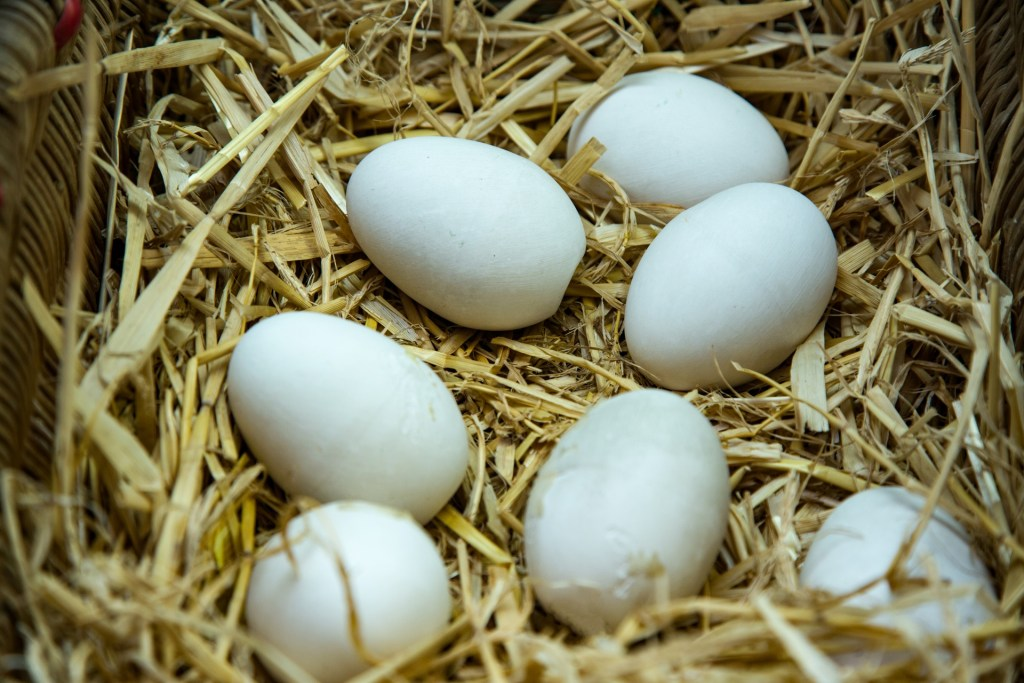 Eggs in a chicken nest.