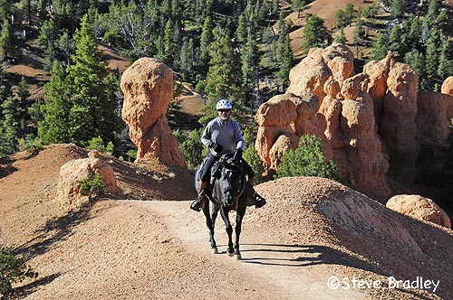 Image result for outlaw and the virgin pioneer ride