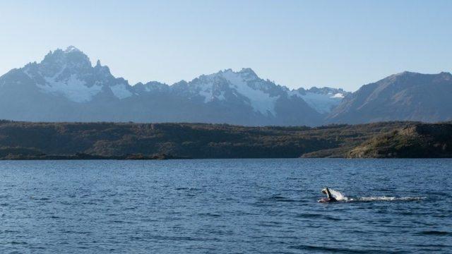 PATAGONMAN XTRI swim - photo patagonman.com