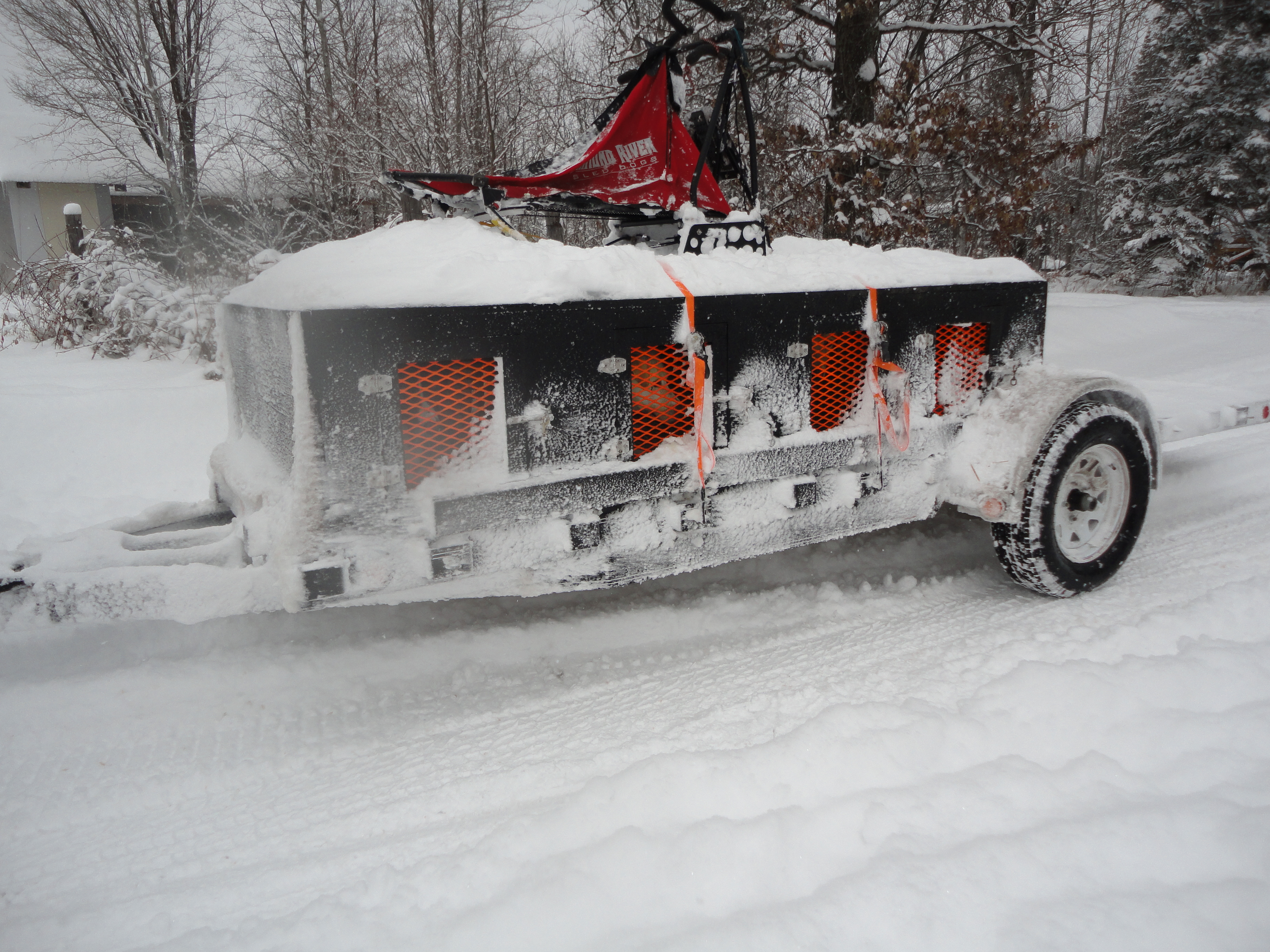 About Sprint Racing Sled Dogs and the Eurohound