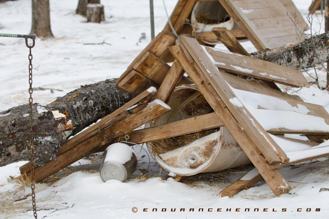 How To Build A Sled Dog House Plans Materials Design Video