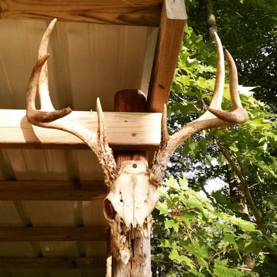 10 point deer rack skull