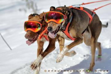 rex spces rexspecs sled dogs dogsledding duluth minnesota two harbors mn dogpower