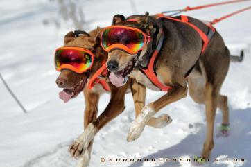 rex spces rexspecs sled dogs dogsledding duluth minnesota two harbors mn dogpower