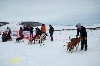 sled dog racing eurohound greyster
