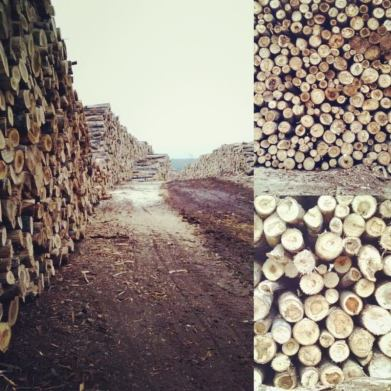 wood harvesting logging off the grid