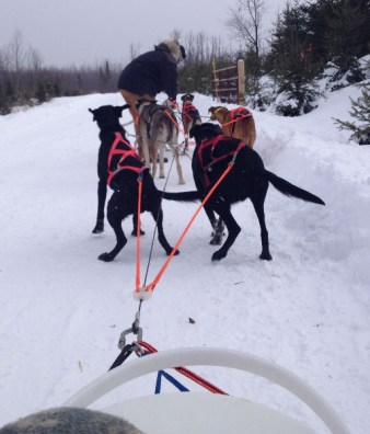 viewfrom-the-sled