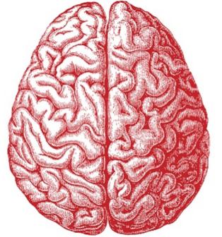 tri brain
