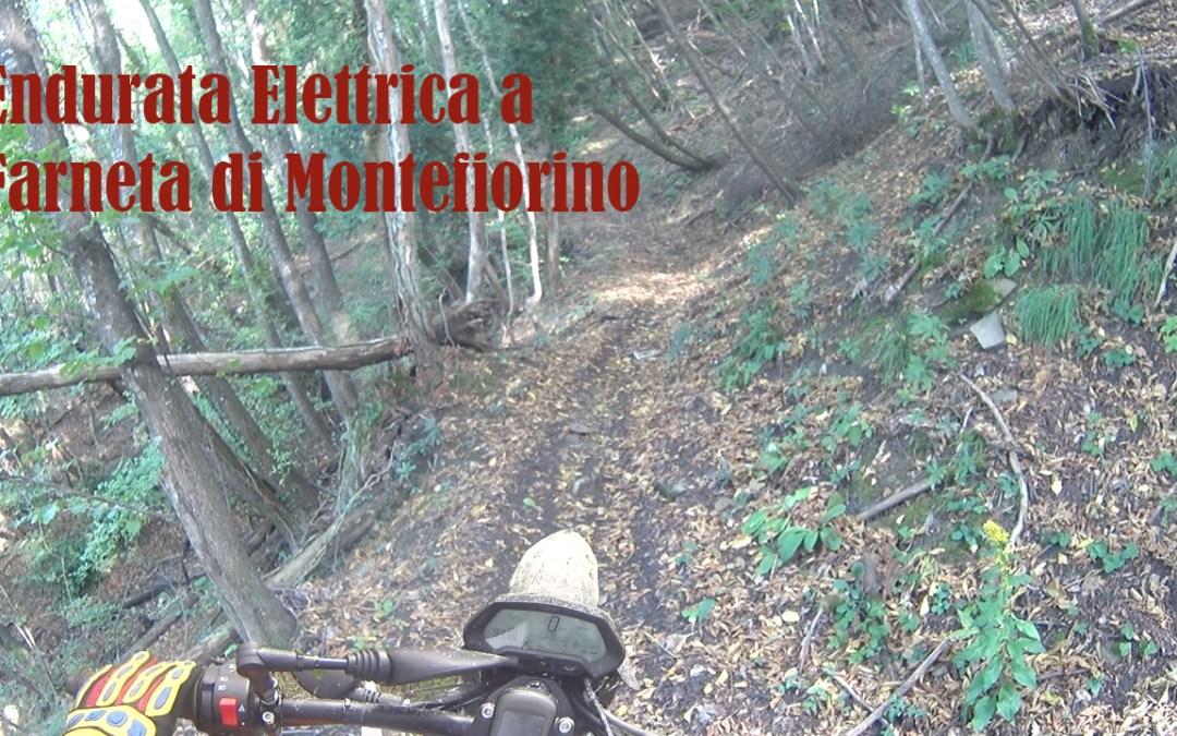 Giro in Enduro Elettrico a Farneta di Montefiorino MO del 10/19