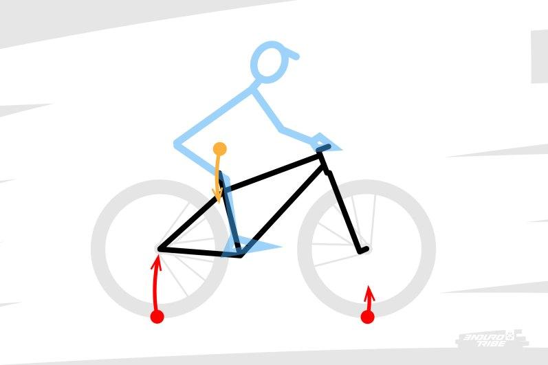 À travers toute la triangulation dont on vient de parler, il résulte qu'une partie du poids du pilote repose sur la roue arrière, et qu'une autre repose sur la roue avant. Il en va du principe d'action-réaction cher à Newton si l'on étudie l'ensemble vélo+pilote. Dans tous les cas, en statique et une grande partie du temps, la répartition du poids du pilote se fait majoritairement sur la roue arrière, et moins sur la roue avant. C'est la position du centre de gravité du pilote, masse majoritaire dans le raisonnement, placée plus proche de la roue arrière, qui veut ça.