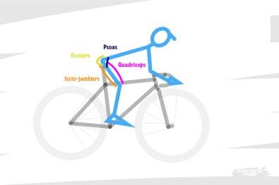 Or, d'un point de vue bio-mécanique, différents muscles participent à cette position et au cycle de pédalage. Notamment le quadriceps - sur le dessus de la cuisse - les iscio-jambiers - derrière la cuisse - le psoas - au coeur du bassin - et les fessiers - que l'on ne présente pas.