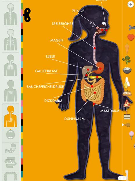 Der menschliche Körper: eine gut gemachte Anatomie Lern App für ...