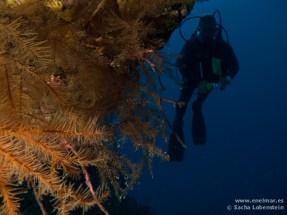 Adrián, Coral negro, Teno - 08012011