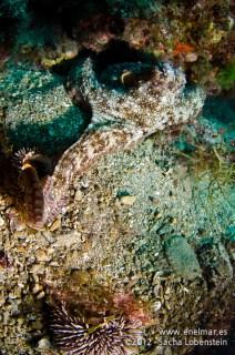 20120221 1054 - enelmar.es - Muelle de Porís de Abona, Pulpo (Octopus vulgaris)