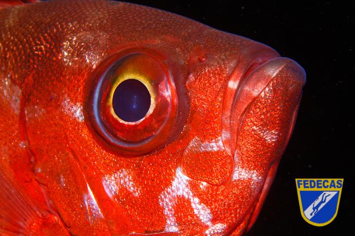 Iker Vildosola Gala, PP - Primer plano pez