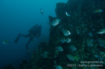 20120404 1711 - enelmar.es - Isra, Muelle de Garachico