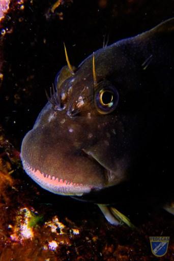 XV Copa Cabildo de Fotografía Submarina 2012 - Michael James Sealy, PP - Primer plano pez