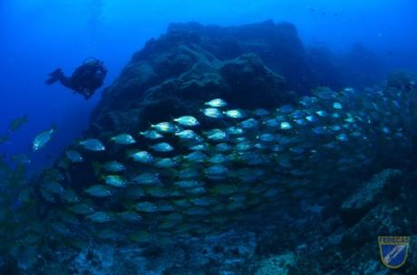 XV-Copa-Cabildo-de-Fotografia-Submarina-2012-AC-Ambiente-con-modelo-Sacha-Lobenstein-Recio-2