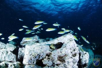 XV-Copa-Cabildo-de-Fotografia-Submarina-2012-AS-Ambiente-sin-modelo-Carlos-Borbones-Perez-2