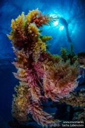20150625-1839-SachaLobenstein-enelmar.es-Carlos Acebes, Telamon < Arrecife, Telamon < Pecios