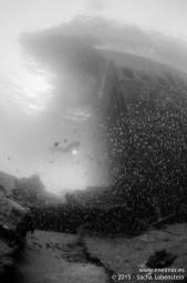 20150625-1904-SachaLobenstein-enelmar.es-Carlos Acebes, Telamon < Arrecife, Telamon < Pecios