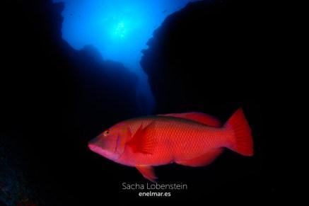 20150830-1058-SachaLobenstein-enelmar.es-Las Chimeneas