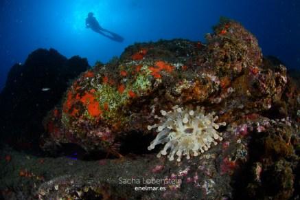 20190607-1028-SachaLobenstein-enelmar.es-Punta Prieta - El Espigon