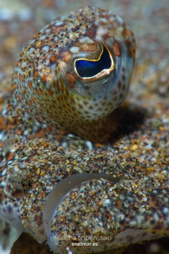 20151201-2123-SachaLobenstein-enelmar.es-Playa de Las Teresitas