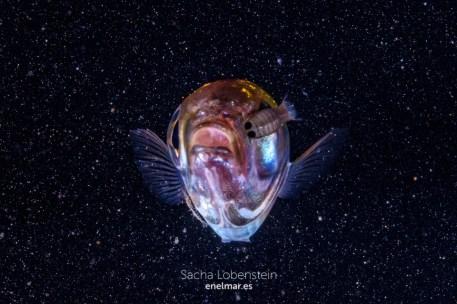 20160104-2037-SachaLobenstein-enelmar.es-Nocturna, Radazul-2