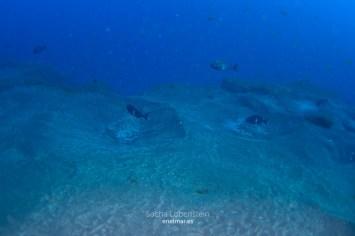 20160110-1021-SachaLobenstein-enelmar.es-Punta Prieta - El Espigon < Güímar < Tenerife < Zonas de Buceo