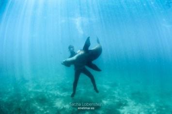 20160531-1215 - Sacha Lobenstein - enelmar.es - Oceanarium Explorer